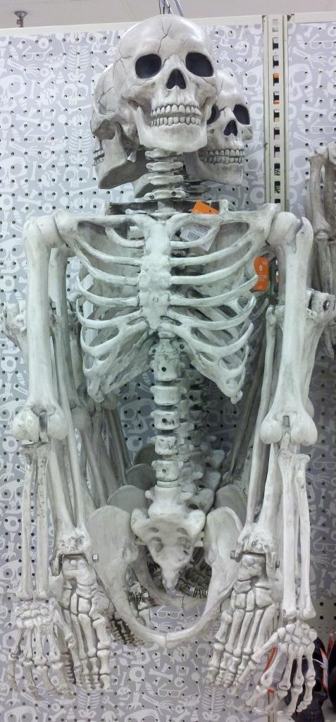 Posable Skeleton ($40)