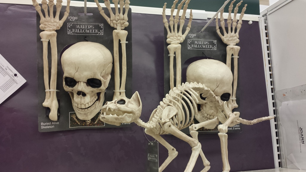 Ground breakers and cat skeleton