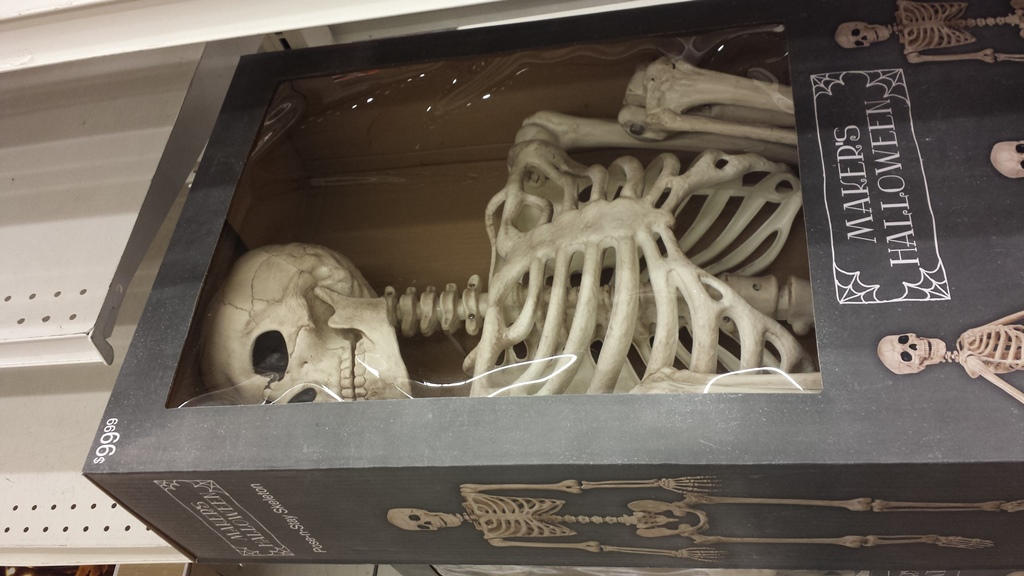 Poseable Skeleton