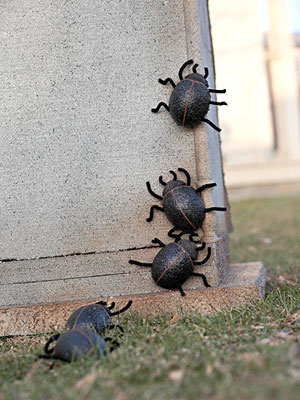 Foam Egg Scarab Beetles